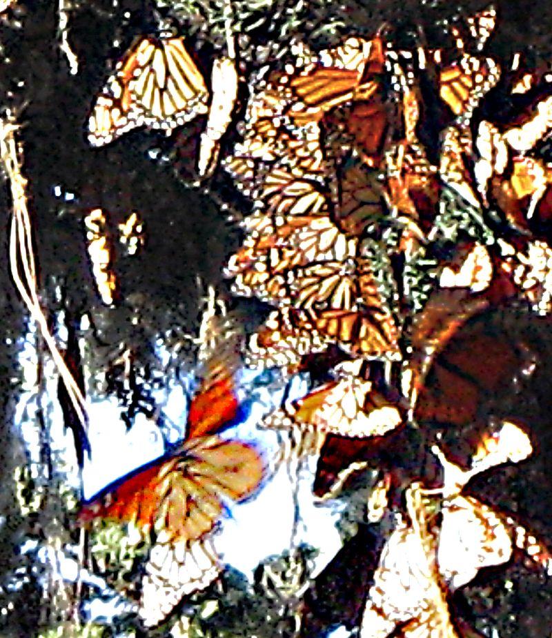 Fly_butterfly2