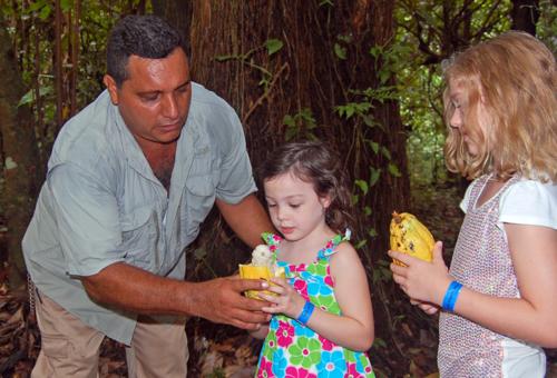 Cacao Fruit in Pico Bonito, La Ceiba, Honduras