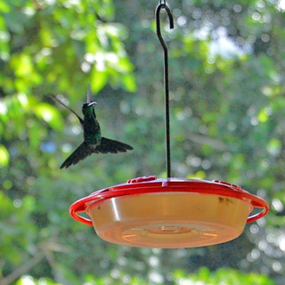 Hummingbird at The Lodge at Pico Bonito, La Ceiba, Honduras