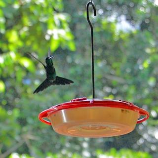 Hummingbird at The Lodge at Pico Bonito, La Ceiba, Honduras