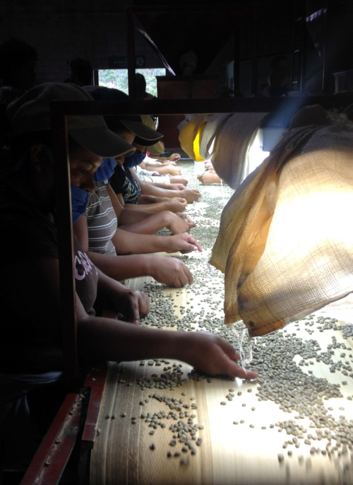 Women working in a coffee factory in Marcala, Honduras