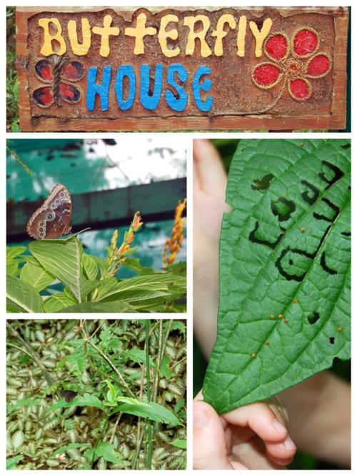 Butterfly House at Pico Bonito, La Ceiba, Honduras