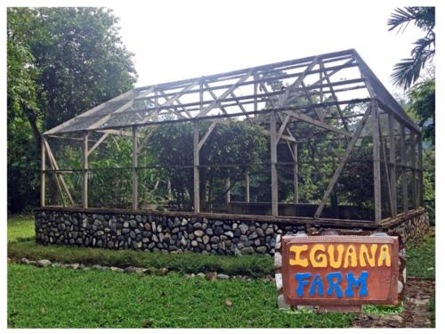 Iguana Farm at Pico Bonito, La Ceiba, Honduras