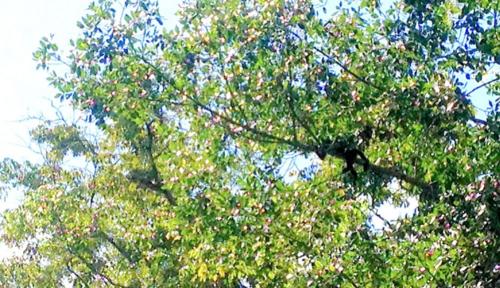 Monkey in a tree at Cacao Lagoon, La Ceiba, Honduras