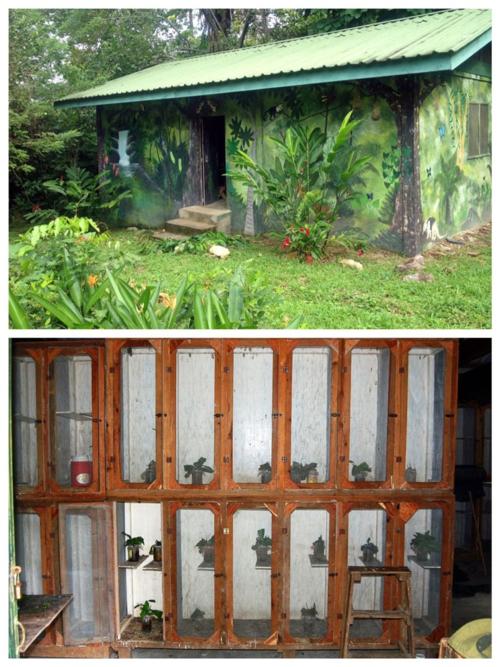 The Larvae House at Pico Bonito, La Ceiba, Honduras