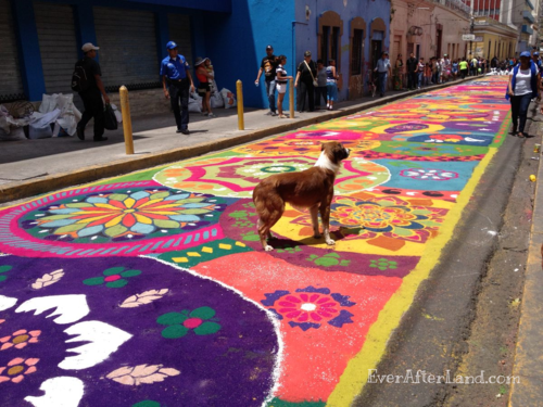Stray dog walking on top of the colorful sawdust Easter carpets.